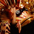 hand crafted art glass lionfish - face