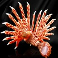hand crafted art glass lionfish - back view